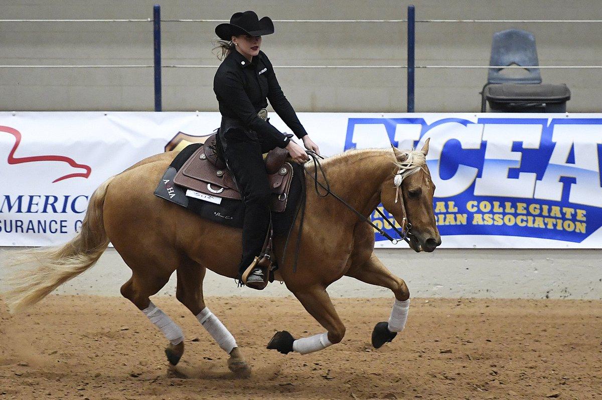NCEA - horse