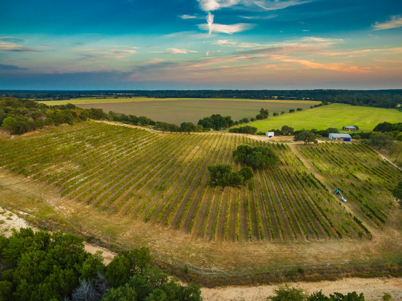 A Family Affair: Valley Mills Vineyards